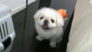 biały psi domek jest wygodny